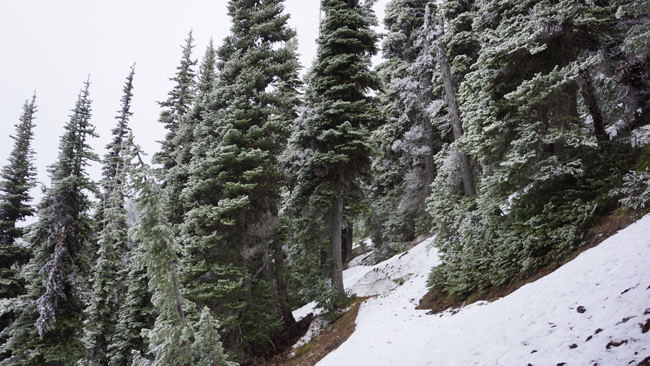 Trail, with snow