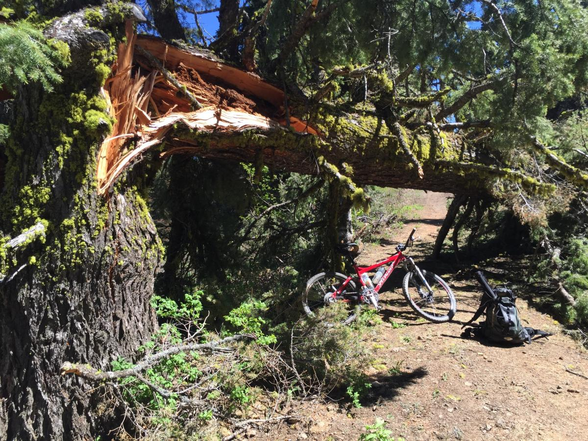 Downed tree on road