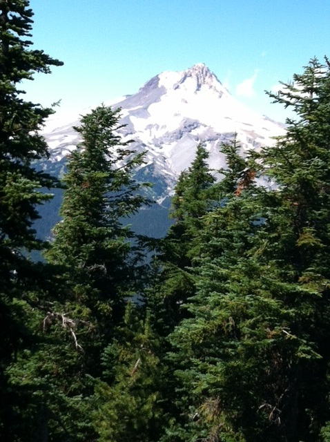 View West of Mt Hood from #6001