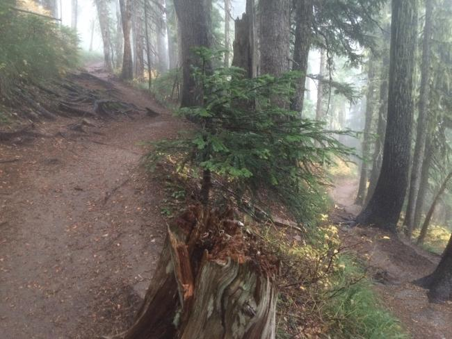 Trail leading to Euclid Lake