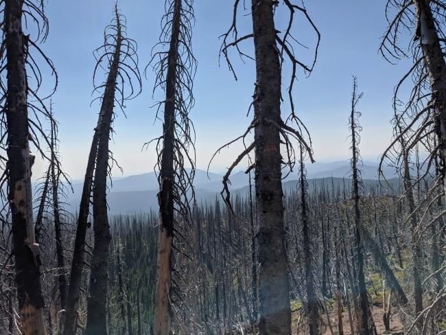 The ridge is covered in burnt trees