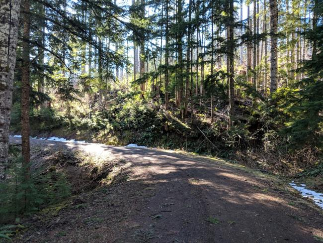 The logging road I hiked, in good repair and not hard to drive