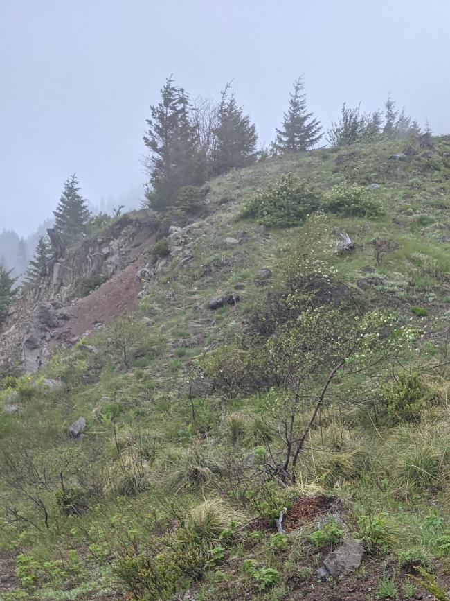 Foggy day on the ridge, shows wildflowers and trees ahead