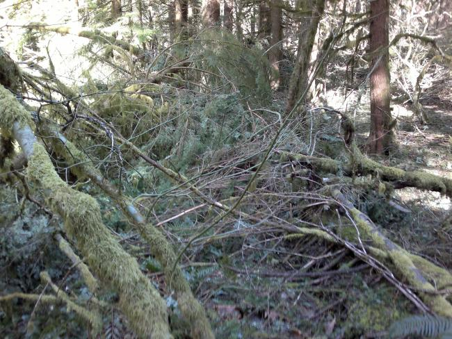 The Augspurger Trail is under this blowdown