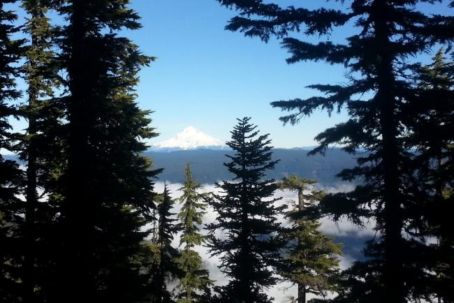 Mt. Hood views