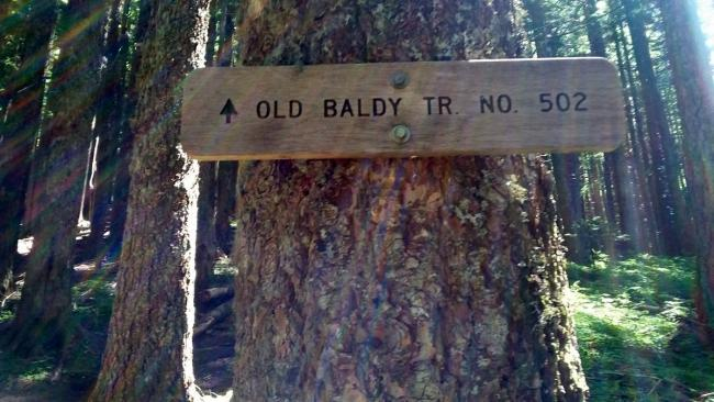 Old Baldy Trail #502