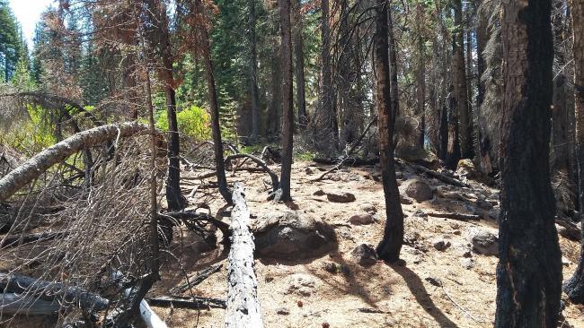 Summit area - between the burn and the manzanita