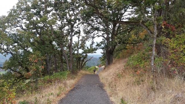 Trail through oak savanna