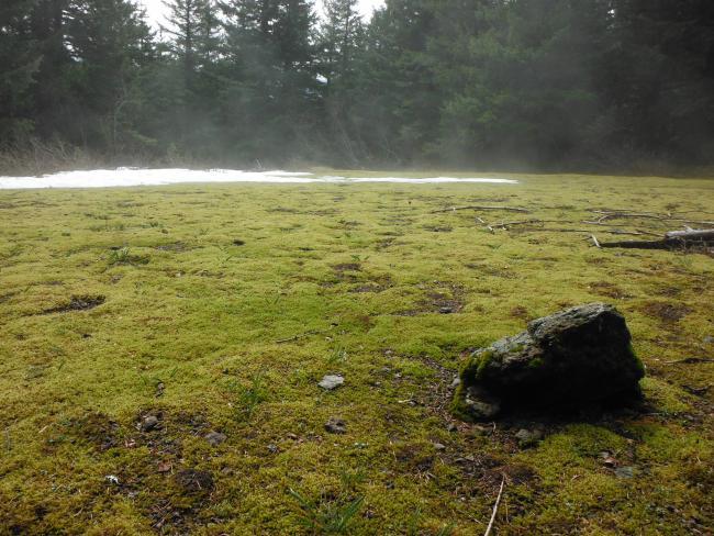 Moss garden on trail