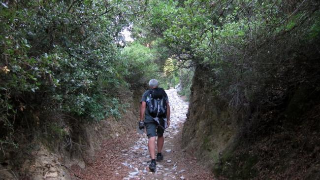 T1 Trail