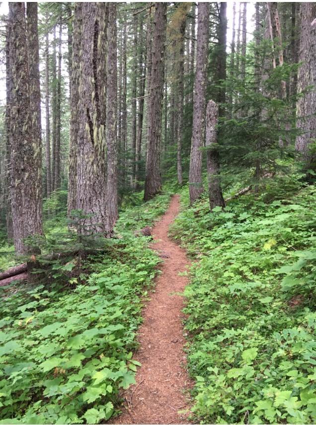 Little Huckleberry Trail