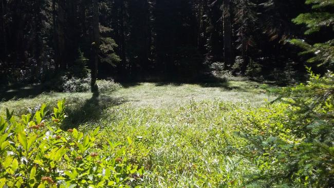 PCT Meadow