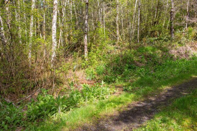 Trailhead off Logging Road