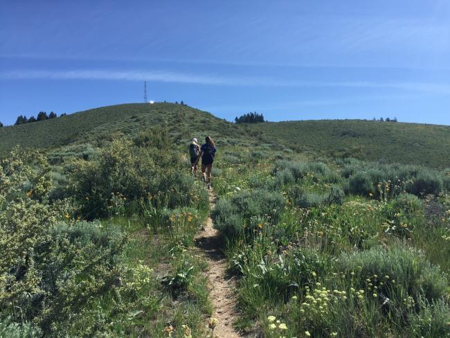 Cutoff trail to the summit