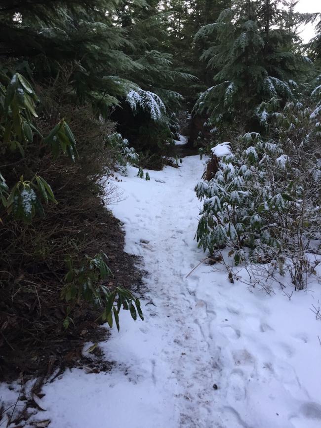 wildcat summit trail