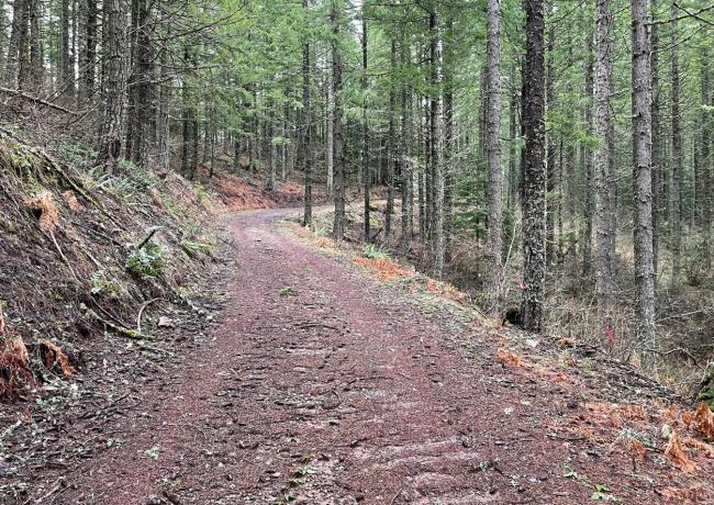 well maintained logging roads