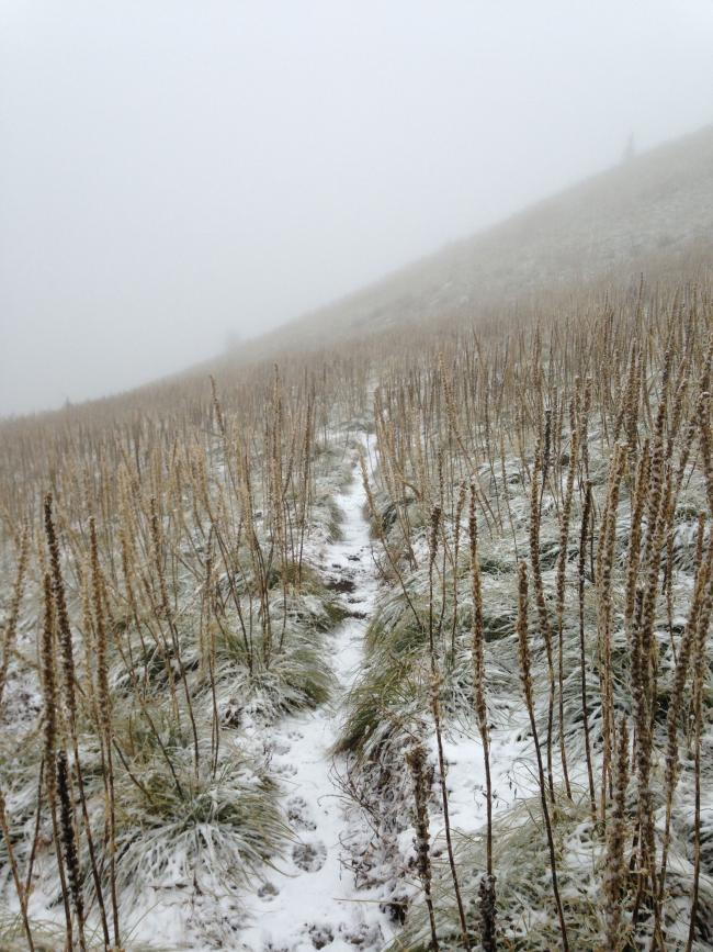 Lots of bear grass heading back down Coffin Mt.