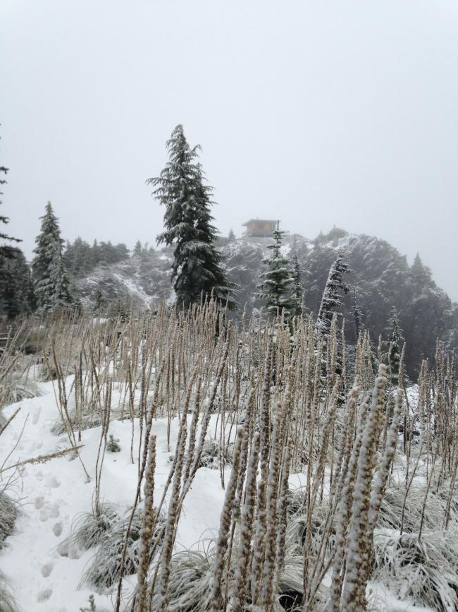 summit lookout with beargrass in foreground