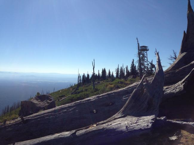Looking towards fire tower from operating position