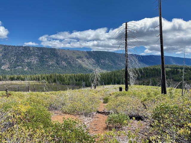 Pic of trail condition, May 2020