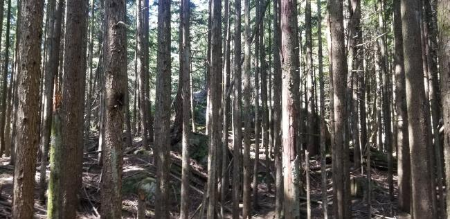Nearing summit in middle of the trees
