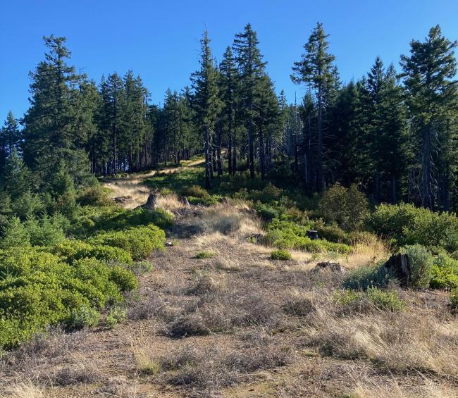 Bear Camp Summit Skid Road